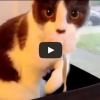 mortified cat