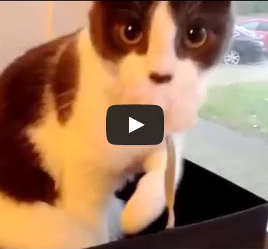 mortified cat