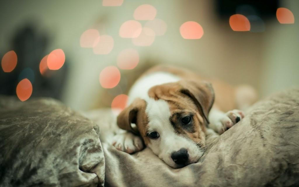 animal-cute-dog-sad-Favim.com-1252780