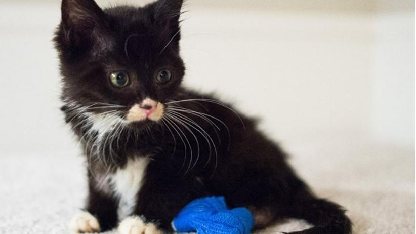 20151002162215-cassidy-the-kitten-tiny-kittens