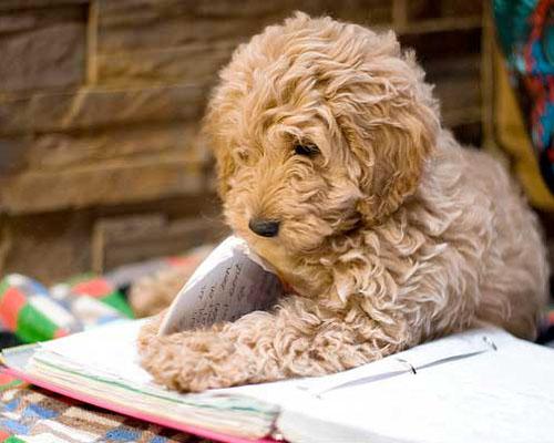 dog-reading_zpsfd927893