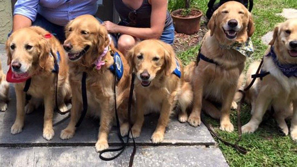 comfort-dogs